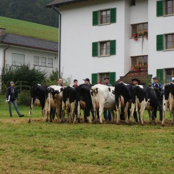Die Spannung steigt! Bleibt unsere Kuh Hosianna auf dem 1. Platz?