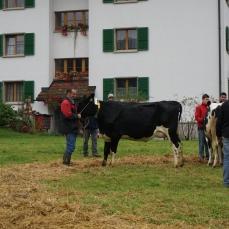Sie hat es geschafft! Hosianna gewinnt die Abteilung Kühe 1. Laktation. Wir sind natürlich sehr stolz!