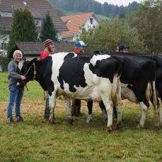 Sofie auf dem 1. Platz mit unserer Kuh Eveline in der Abteilung Kühe 3. Laktation.